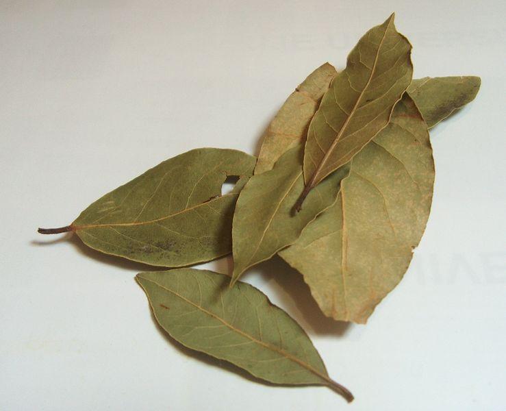 Właściwości lecznicze liścia laurowego